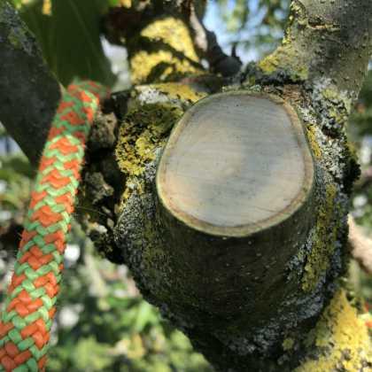 Baumpflege